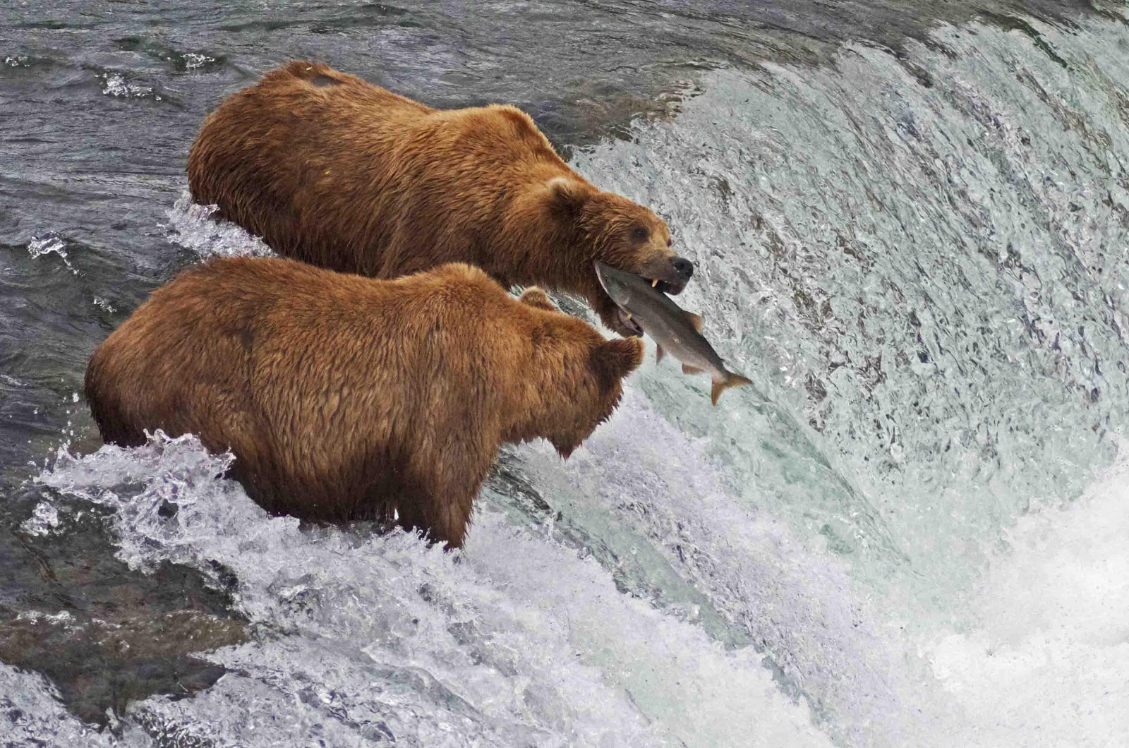 Phishers delight avoiding email scams infospectives for Bear catching fish